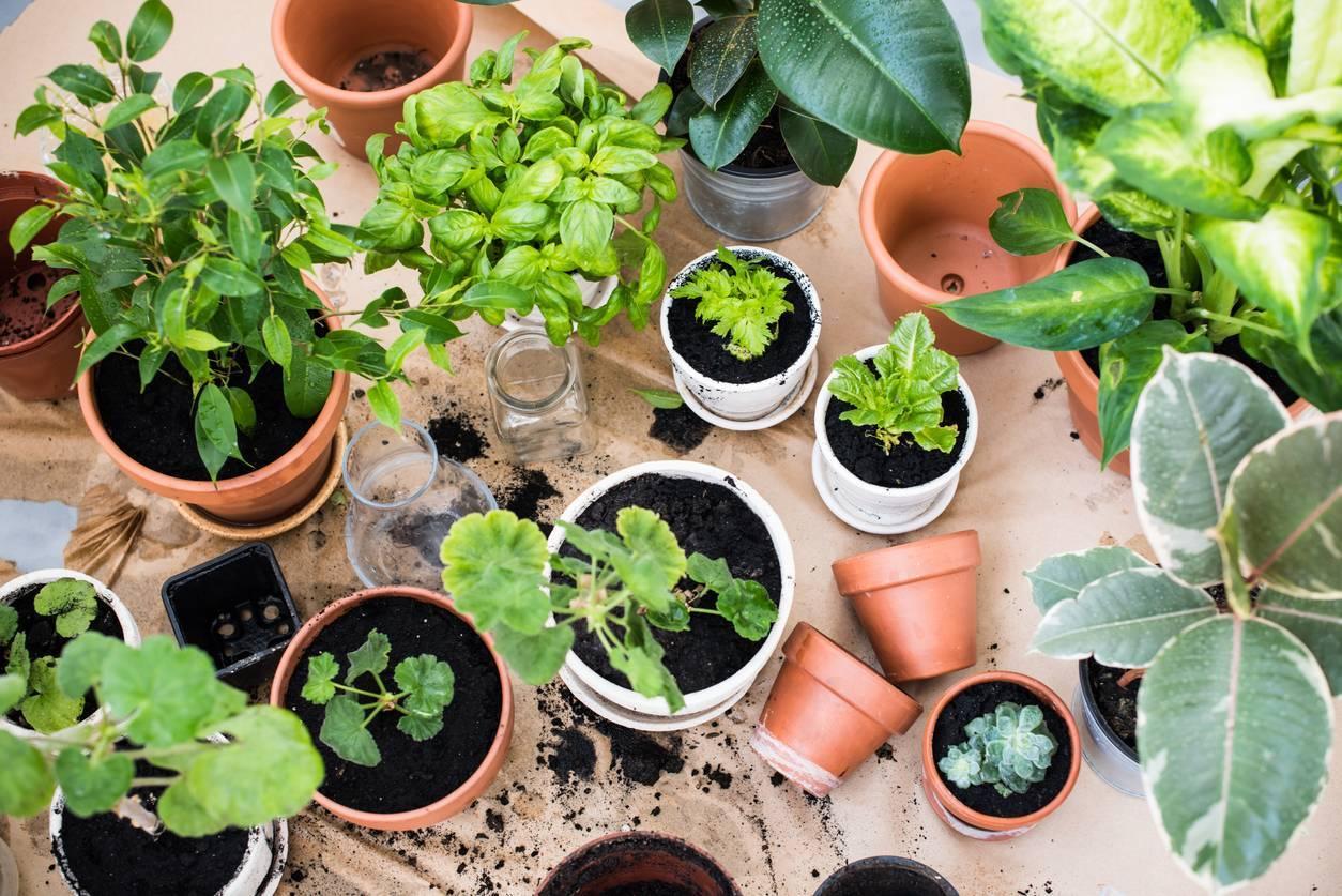 pot pour plante en terre cuite